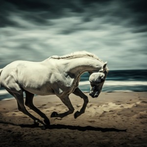 Horse Running On Beach