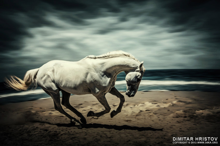 Horse Running On Beach photography featured equine photography animals  Photo