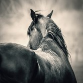 Outdoor profile horse head portrait – Equestrian photography