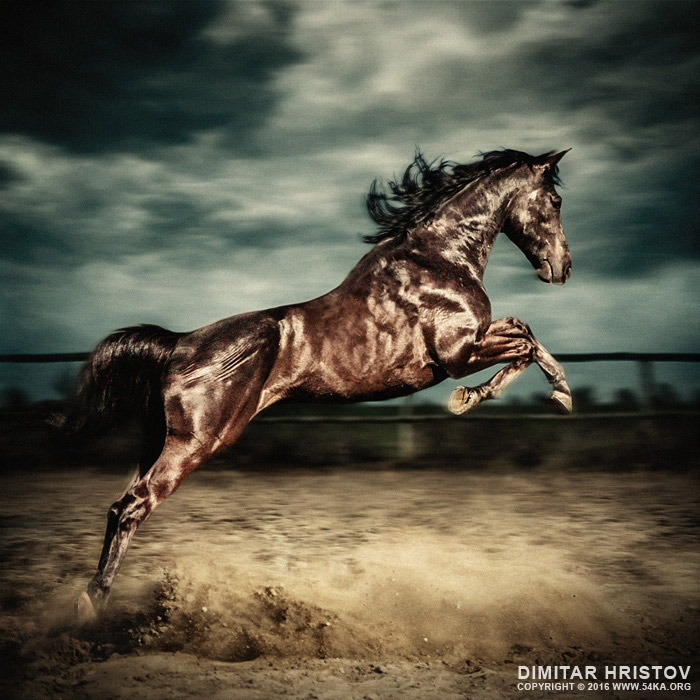 Beautiful wild stallion jumping in dust   equestrian photography on the stormy sky photography featured equine photography animals  Photo