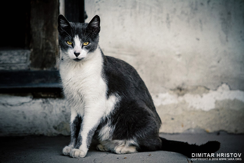 Beautiful cat on the street photography daily dose animals  Photo