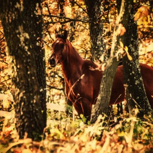 Beautiful horse in the autumn forest