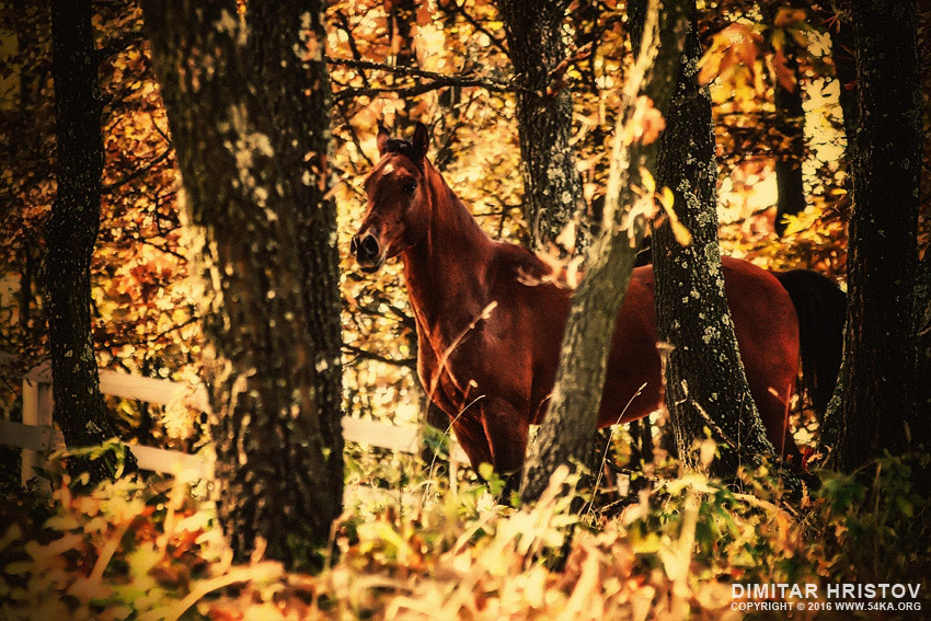Beautiful horse in the autumn forest photography equine photography animals  Photo