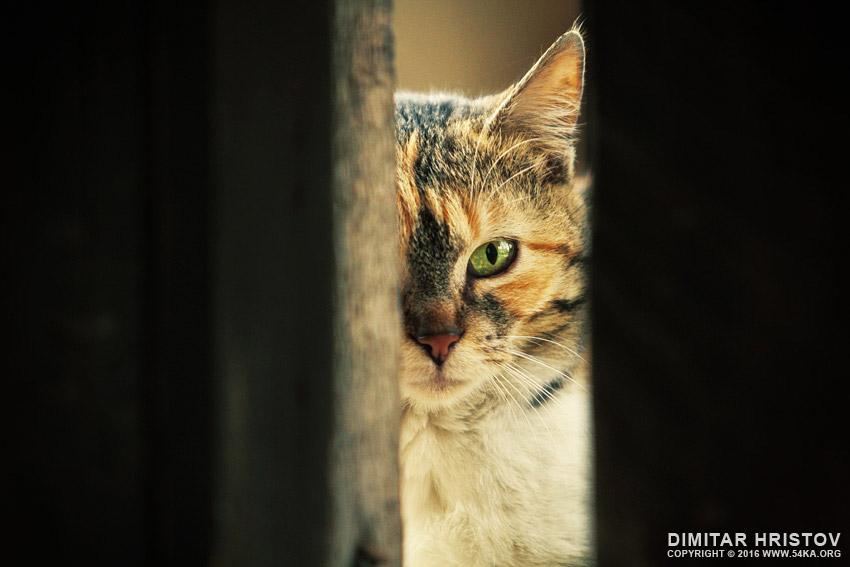 Green eye cat   Close up portrait photography animals  Photo
