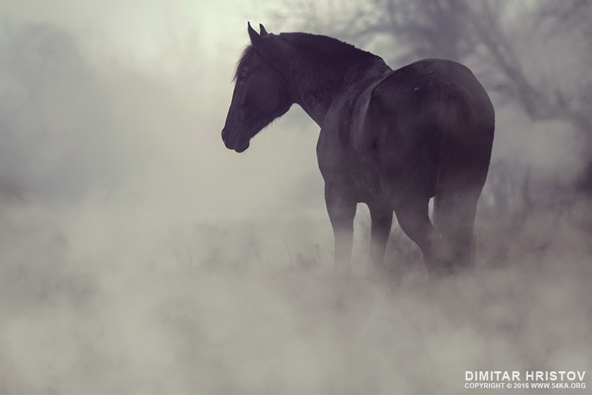 Black horse in the dark mist photography top rated featured equine photography animals  Photo