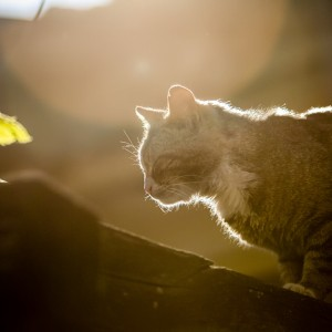 Cat on the sunset light