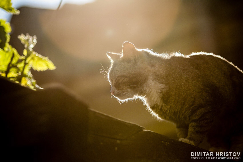Cat on the sunset light photography top rated featured animals  Photo