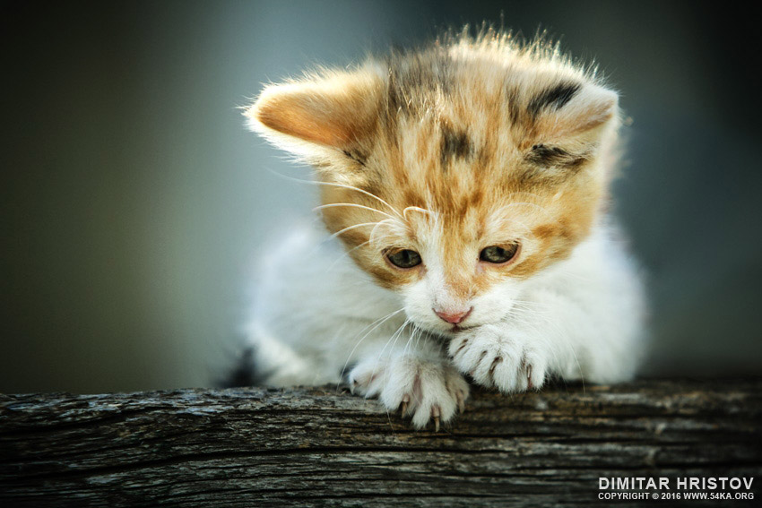 Cute little cat photography top rated featured animals  Photo