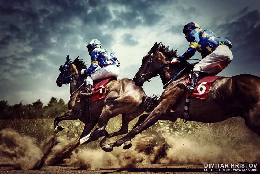 Gambling horses   horse competition photography top rated featured equine photography animals  Photo