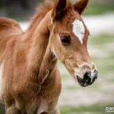 Little horse – Baby animal