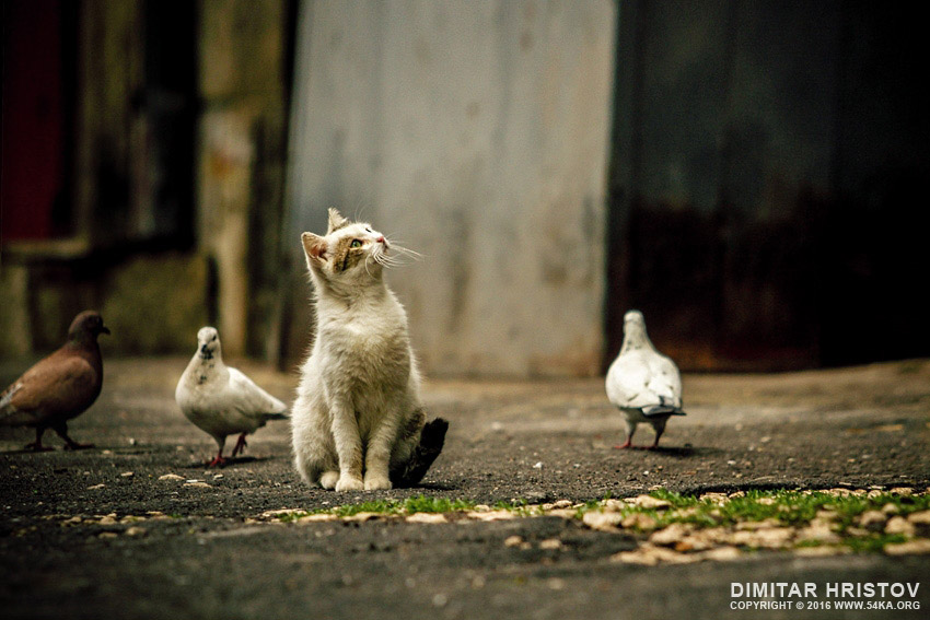 Little street cat and lovely lazy day photography featured animals  Photo
