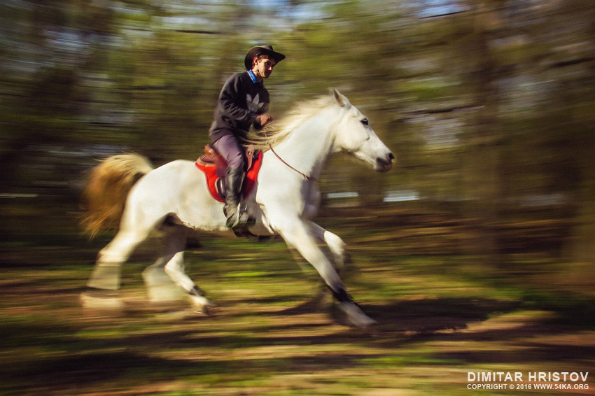 Man riding a beautiful white horse in autumn forest photography extreme equine photography daily dose animals  Photo