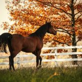 Horse in the beautiful shine autumn forest