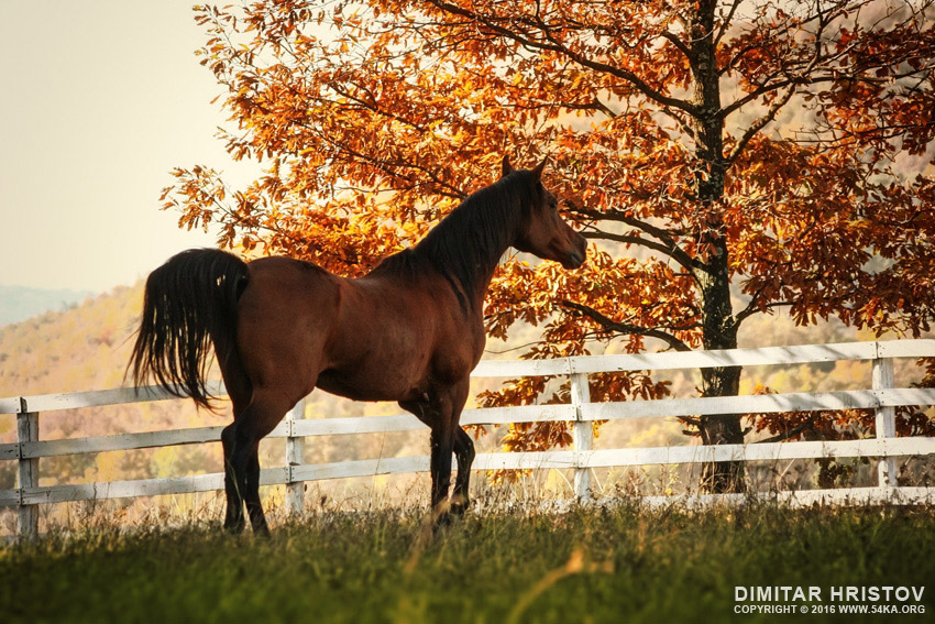 Horse in the beautiful shine autumn forest photography top rated featured equine photography animals  Photo