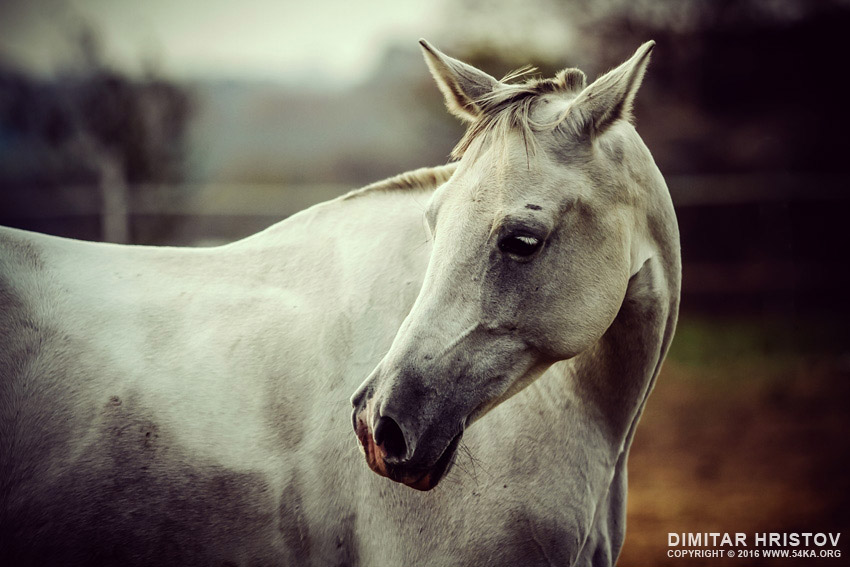 Lonely white horse photography equine photography animals  Photo