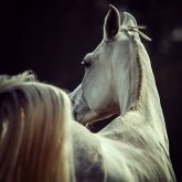 White horse looking behind