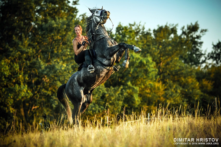Girl riding rearing up horse photography featured equine photography animals  Photo
