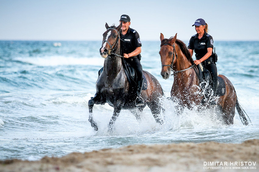 Police horses patrol galloping in the water photography equine photography animals  Photo