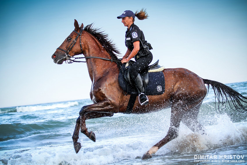 Policewoman riding horse in the water on the beach photography featured equine photography animals  Photo