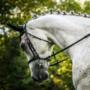 Portrait of a dressage white horse