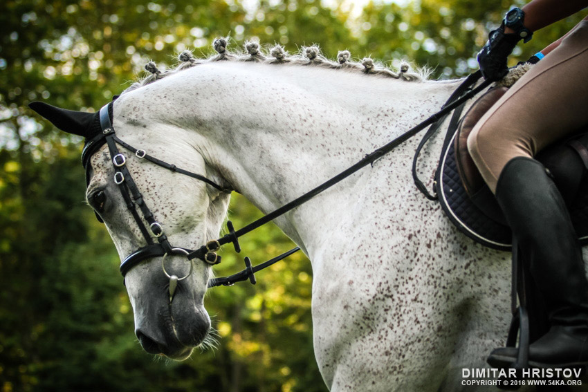 Portrait of a dressage white horse photography equine photography animals  Photo