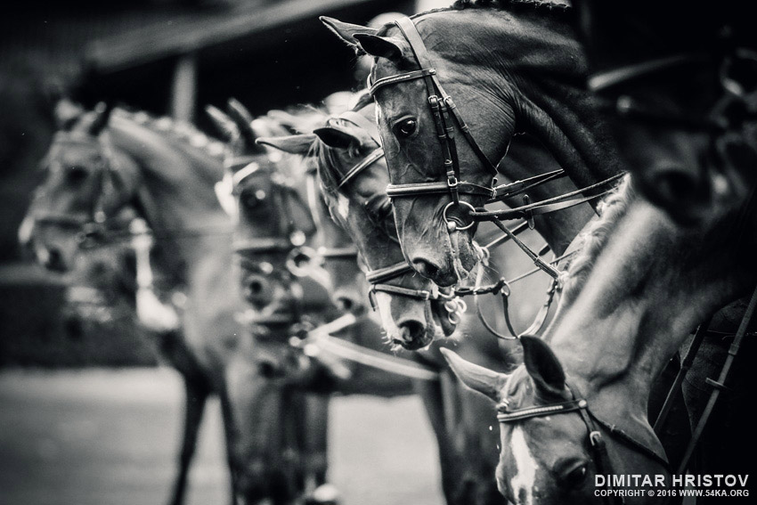 Portrait of a sport horses photography equine photography animals  Photo