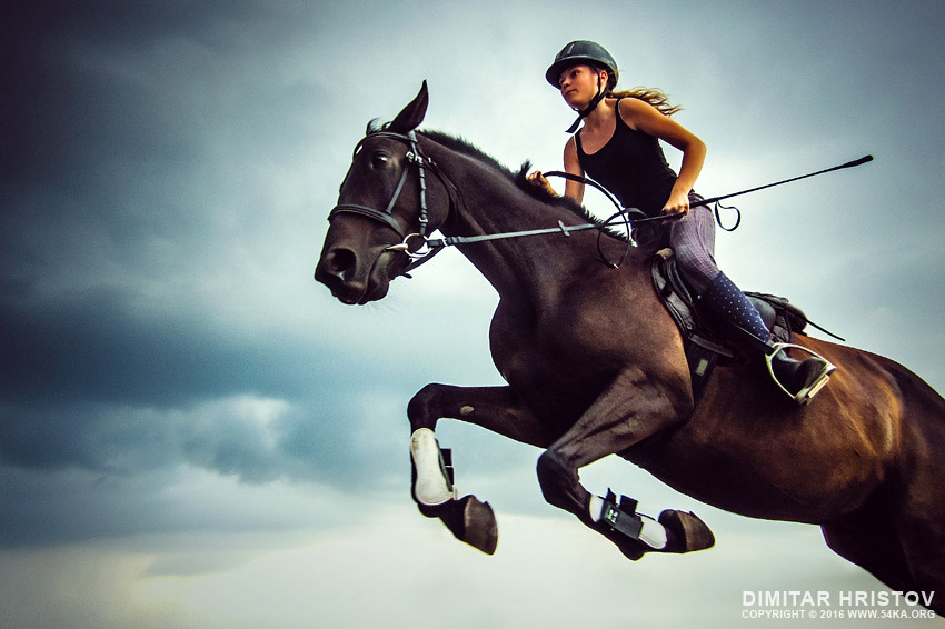 Female jockey with purebred jumping horse photography equine photography animals  Photo