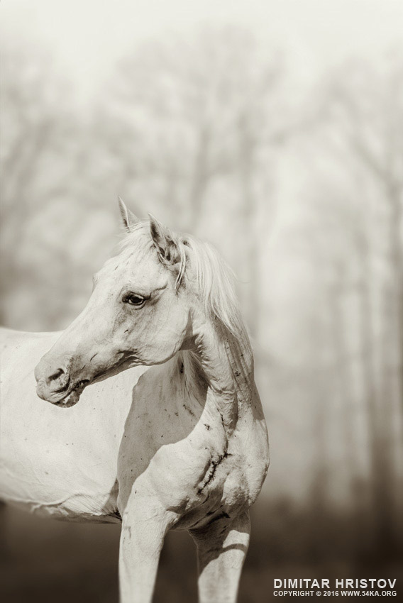 Close up portrait of lone white horse photography featured equine photography animals  Photo