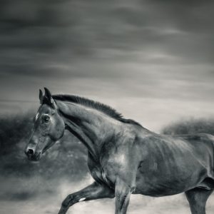 Black horse in winter day