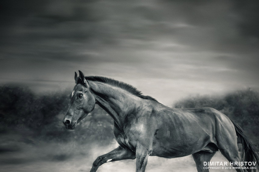 Black horse in winter day photography featured equine photography animals  Photo