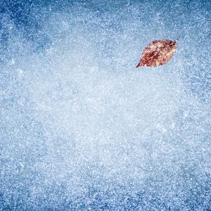 Frozen leaf on the ice