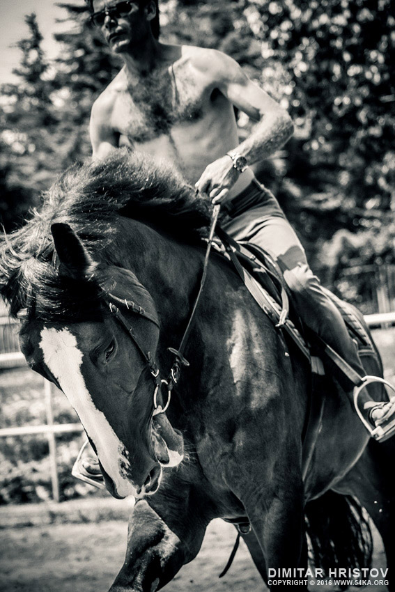Man and black stallion in a field photography equine photography daily dose black and white  Photo