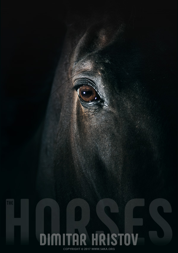 Black horse eye   Beautiful close up photography featured equine photography animals  Photo