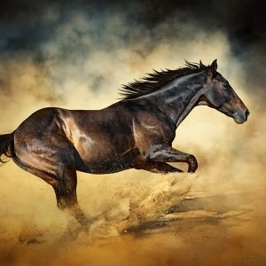 Black stallion horse – galloping like a devil
