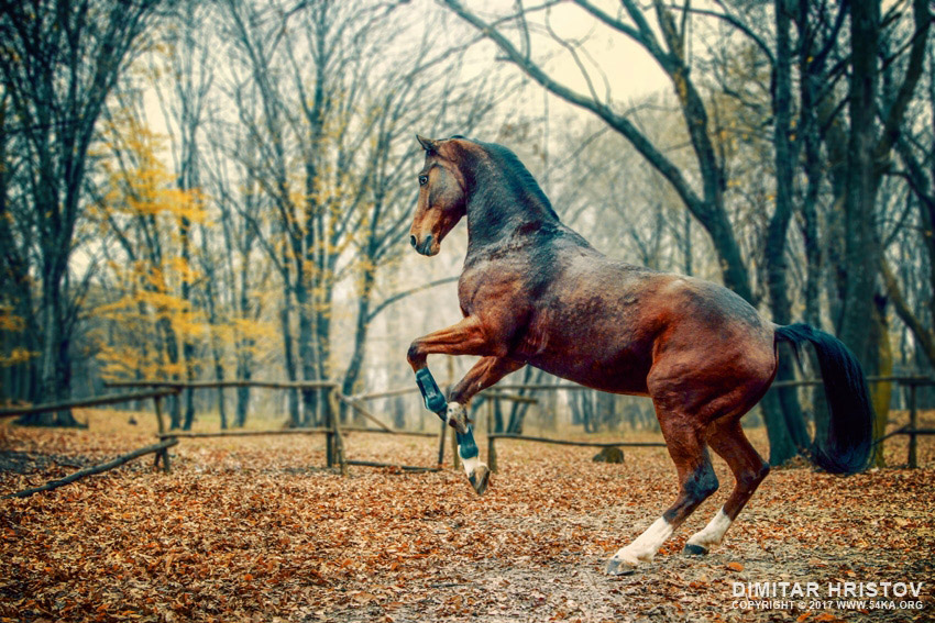 Brown horse in the forest photography featured equine photography animals  Photo