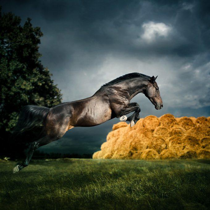 Wild horse jumping
