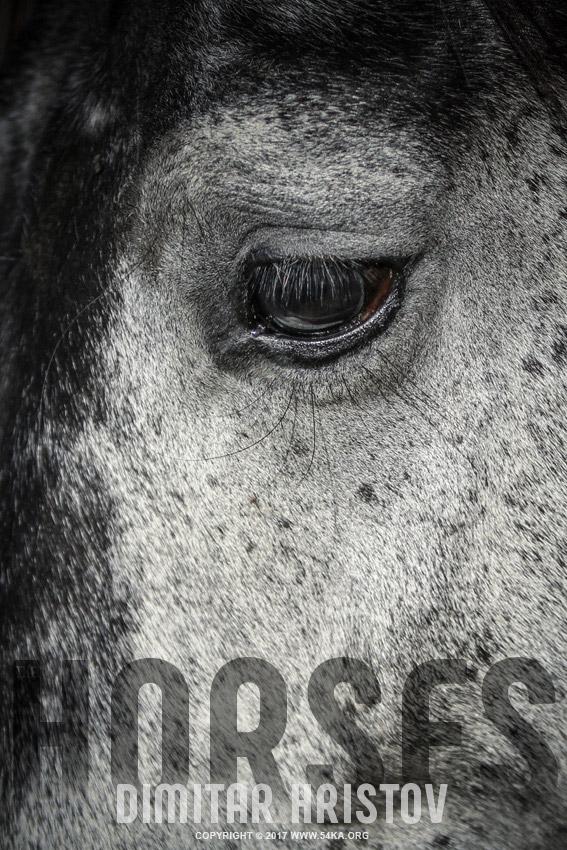 Arabian horse eye photography featured equine photography animals  Photo