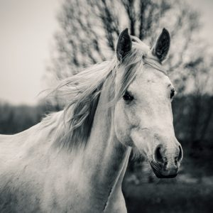 Beautiful Lonely White Horse
