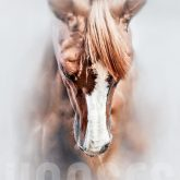 Equine portrait – Beautiful thoroughbred horse head