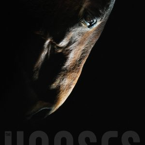 Horse head – strobist art portrait