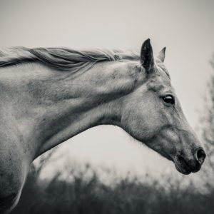 Lonely white horse – Against the wind