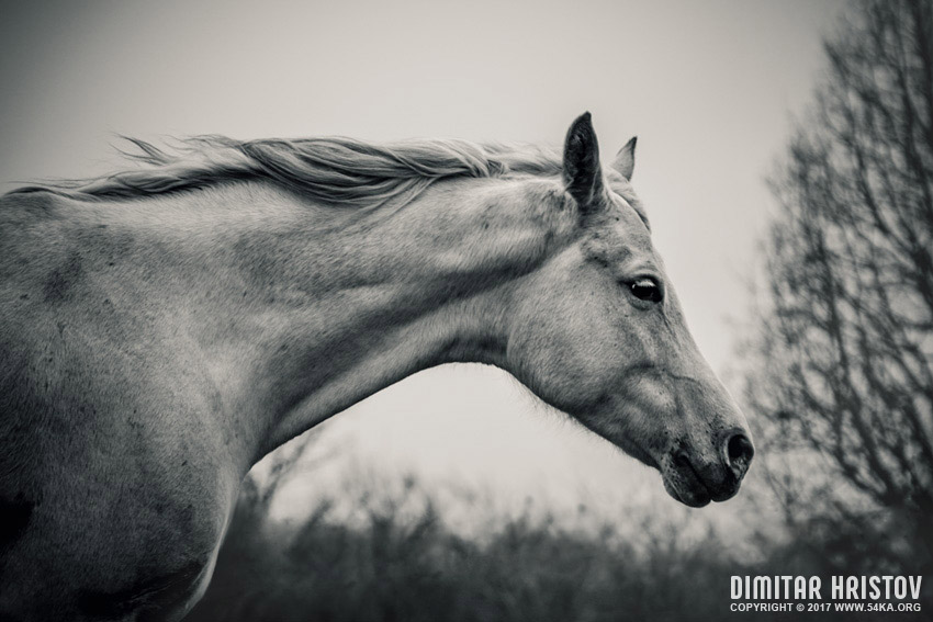 Lonely white horse   Against the wind photography stories top rated featured equine photography animals  Photo