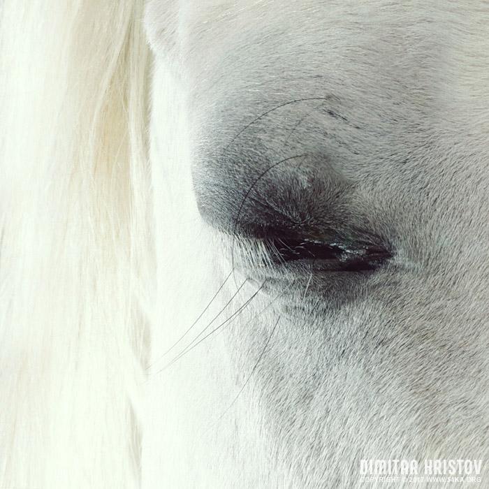 White horse beautiful eye photography featured equine photography animals  Photo