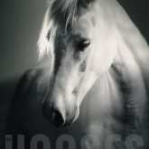 White Horse Head – Strobist Portrait