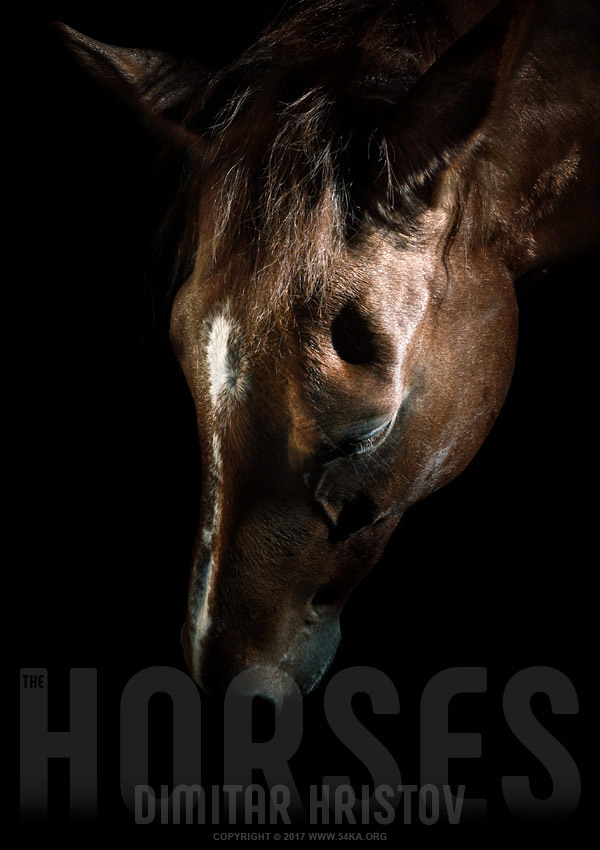 Bown horse portrait photography equine photography animals  Photo