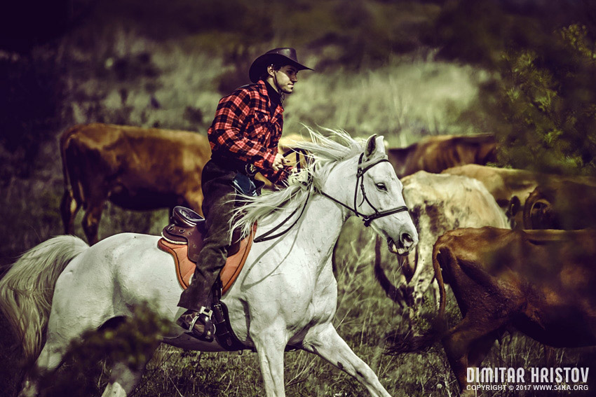 Cowboy riding white horse photography stories featured equine photography animals  Photo