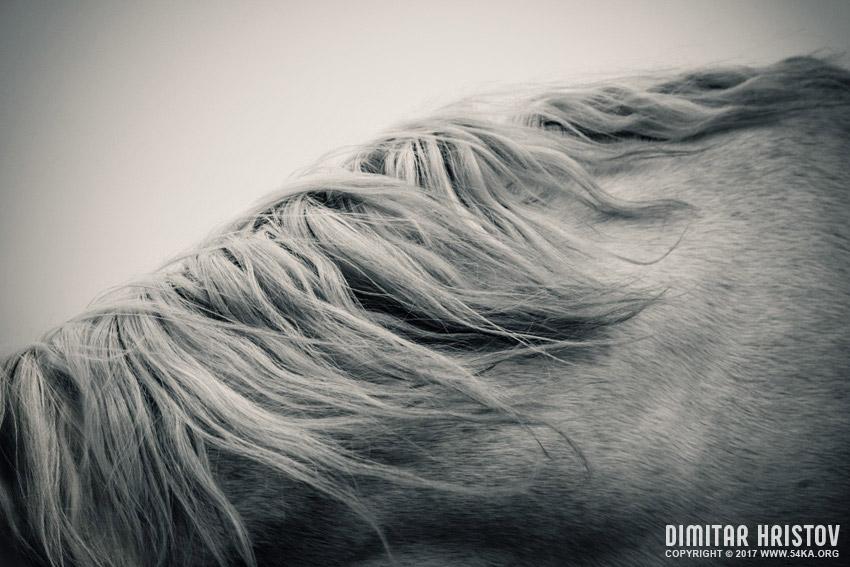Horse mane photography equine photography animals  Photo