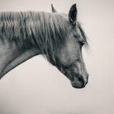 White Horse Neck