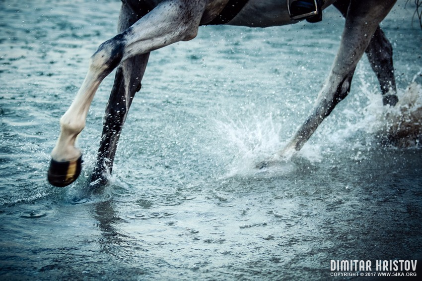 Horse legs running on the water photography featured equine photography animals  Photo