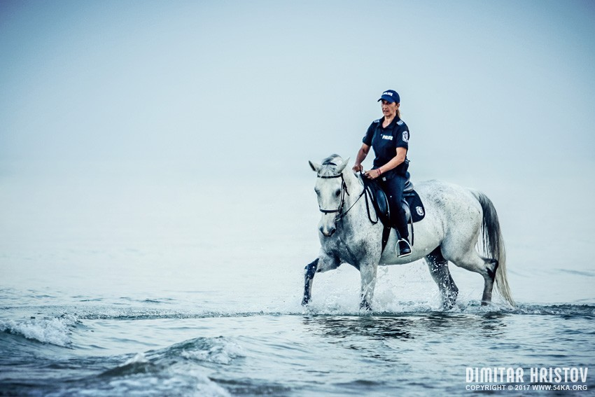 Police woman riding white horse in the sea photography top rated featured equine photography animals  Photo